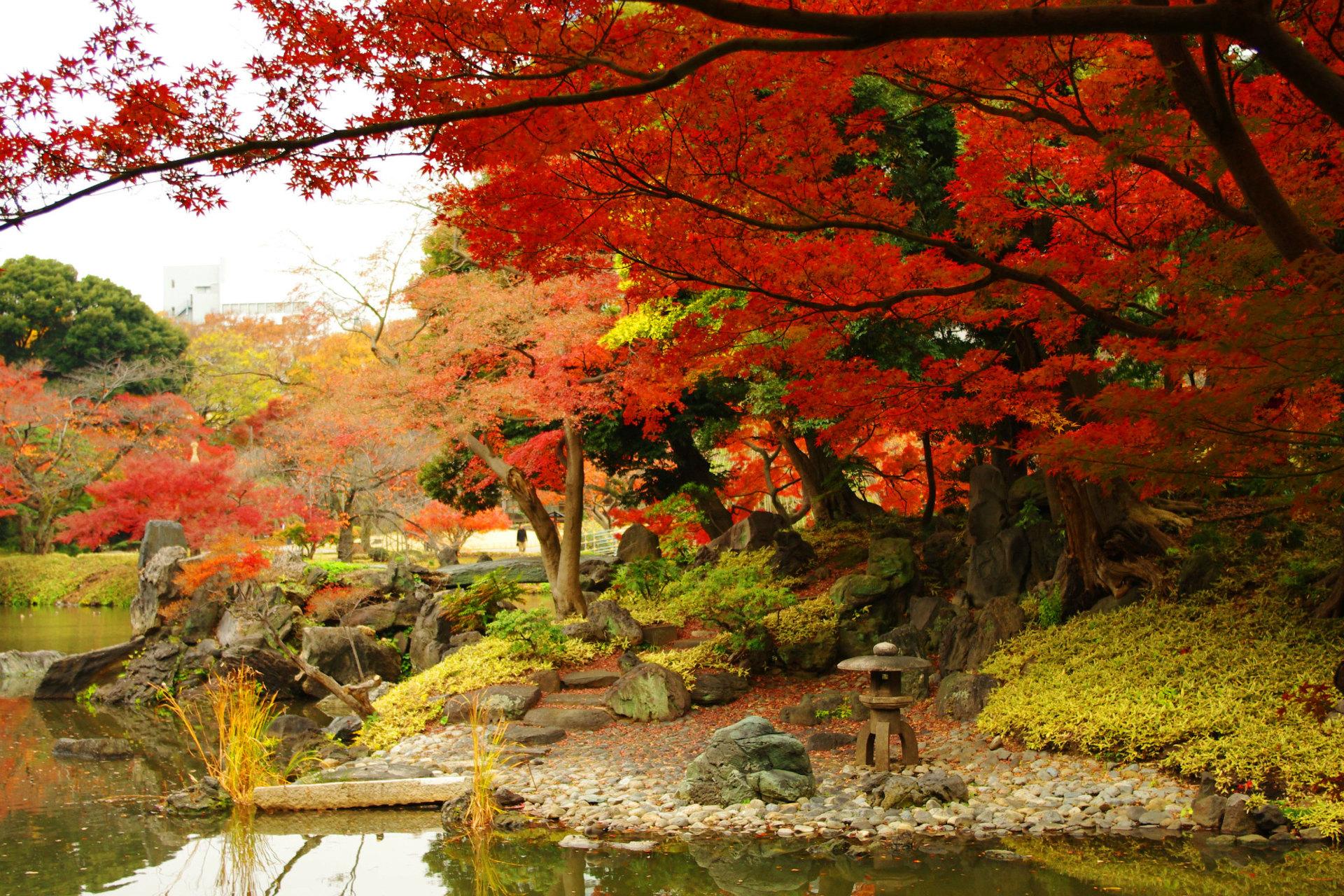 小石川後楽園の紅葉の見頃時期・シーズンは?東京ドームシティのイルミネーションも
