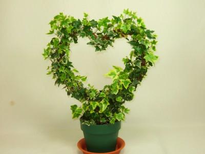 plants_02