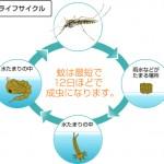 mosquito_img