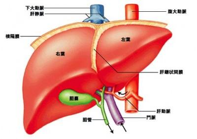 肝臓 数値